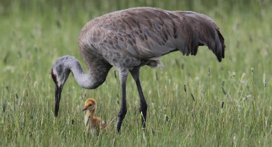 Thanks to everyone who protects our wild places for families of all kinds! (Credit: K Steele/The Wetlands Conservancy)